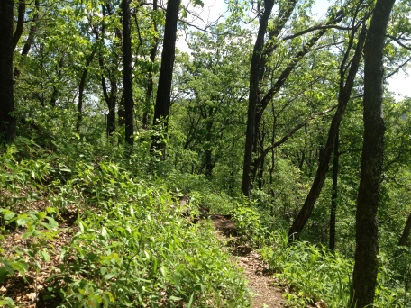 Ozark Highland Trail in May near Cherry Bend